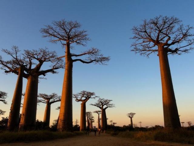 Menu Baobab